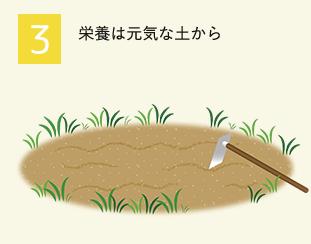 3.栄養は元気な土から